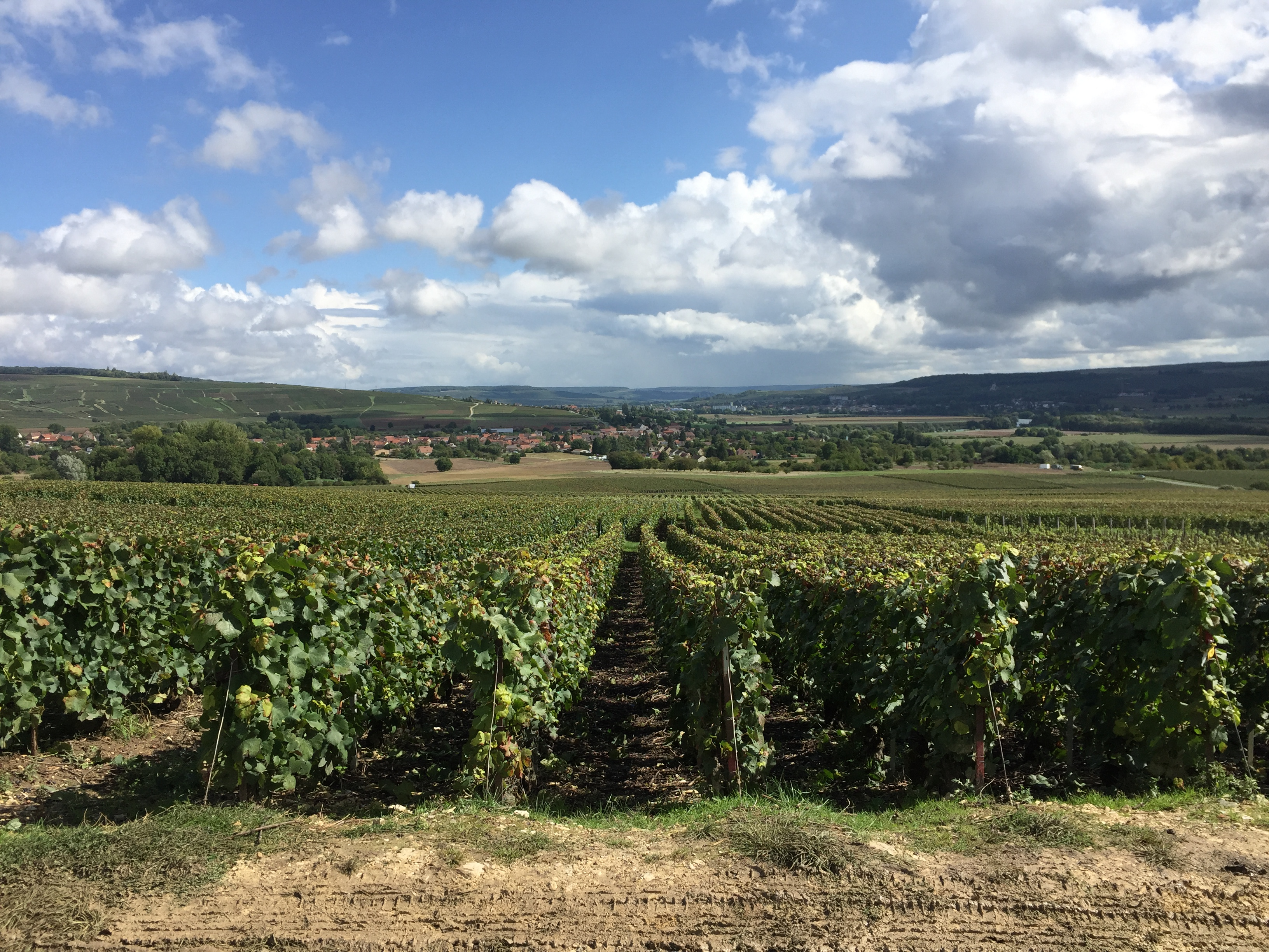 Private day trip to Champagne