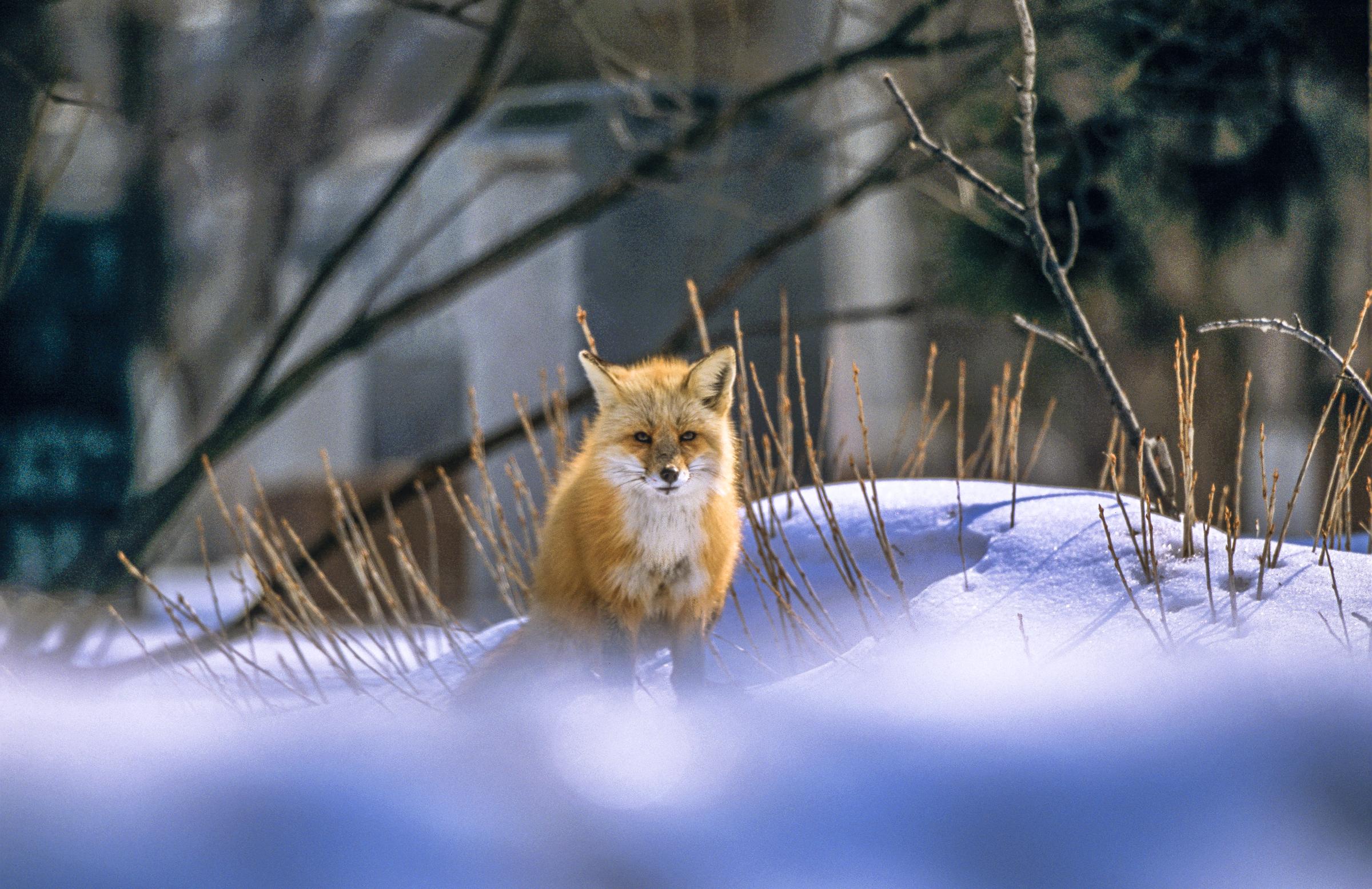 Concours photo édition 2020-2021 De solstice en équinoxe