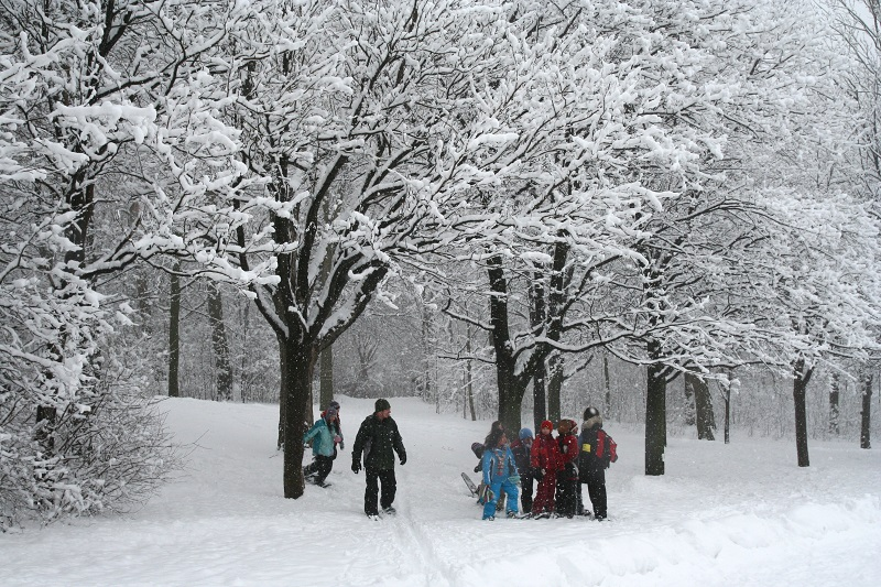 Family-Friendly Snowshoeing - At The Heart Of The Forest
