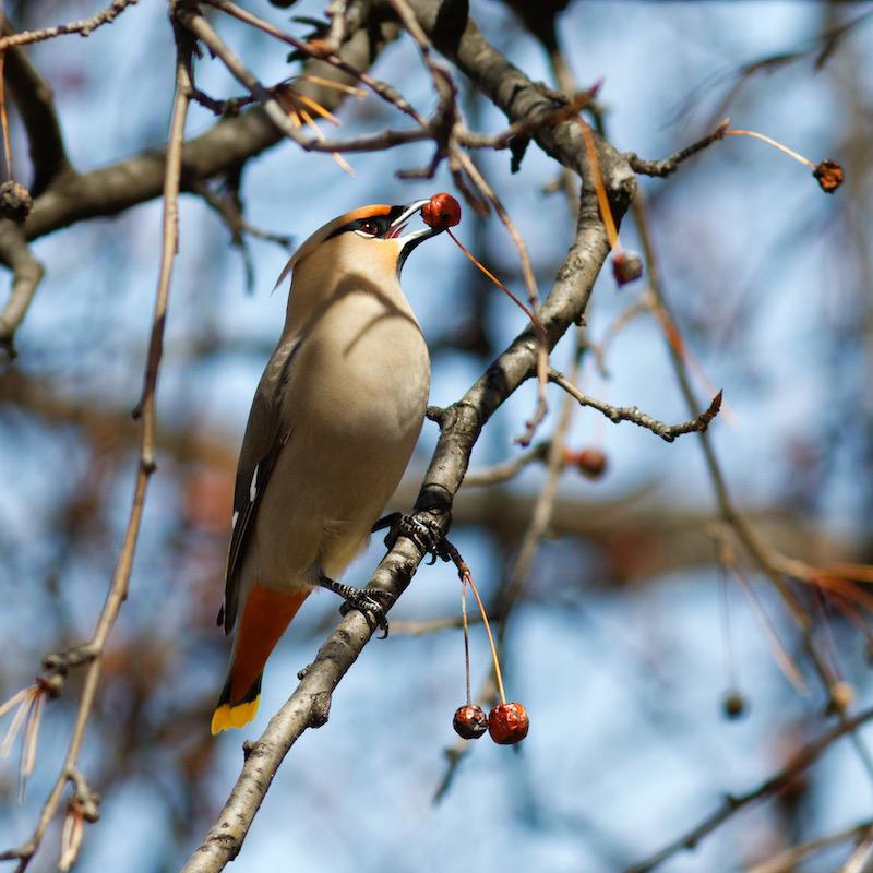 Randonnée ornithologique