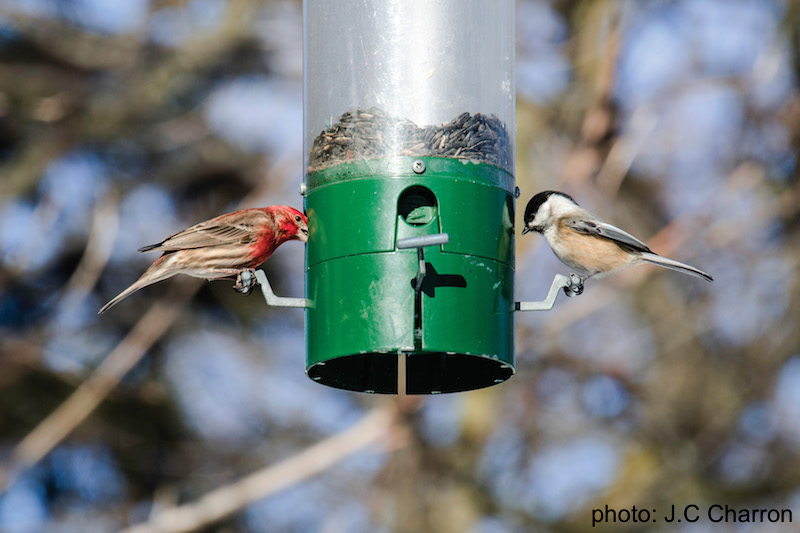 Circuit des mangeoires d'oiseaux