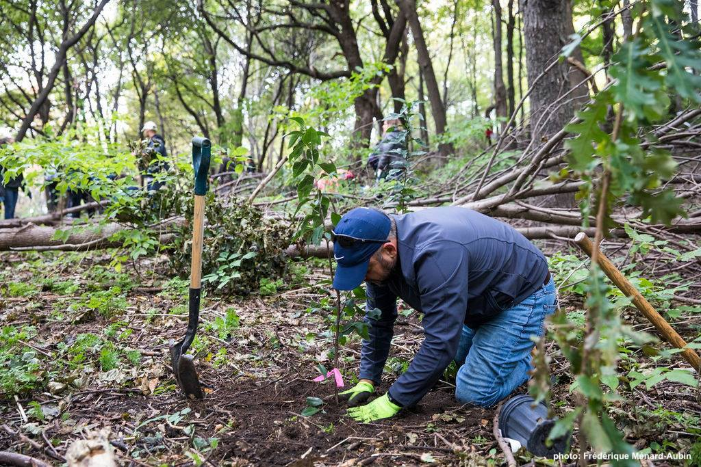 Volunteer: Planting Native Trees and Shrubs