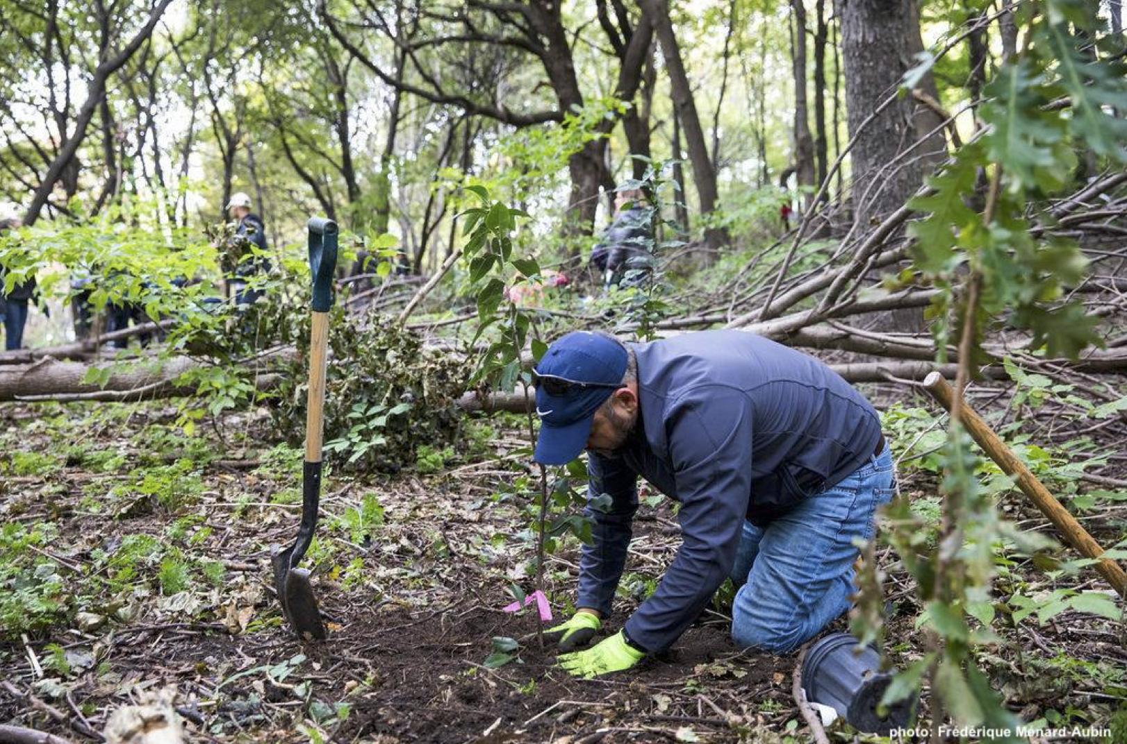 Bénévolat : maîtrise du nerprun cathartique et plantations de végétaux indigènes