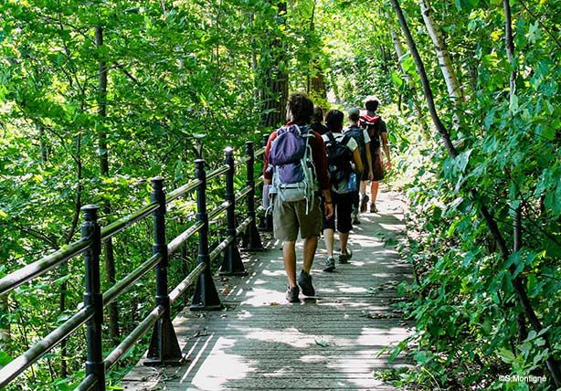 Three Summits of Mount Royal Guided Discovery Walk