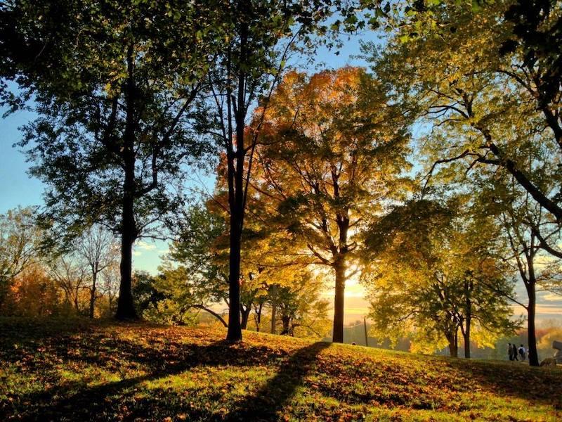 Randonnée guidée : Montée au coeur de la forêt du mont Royal