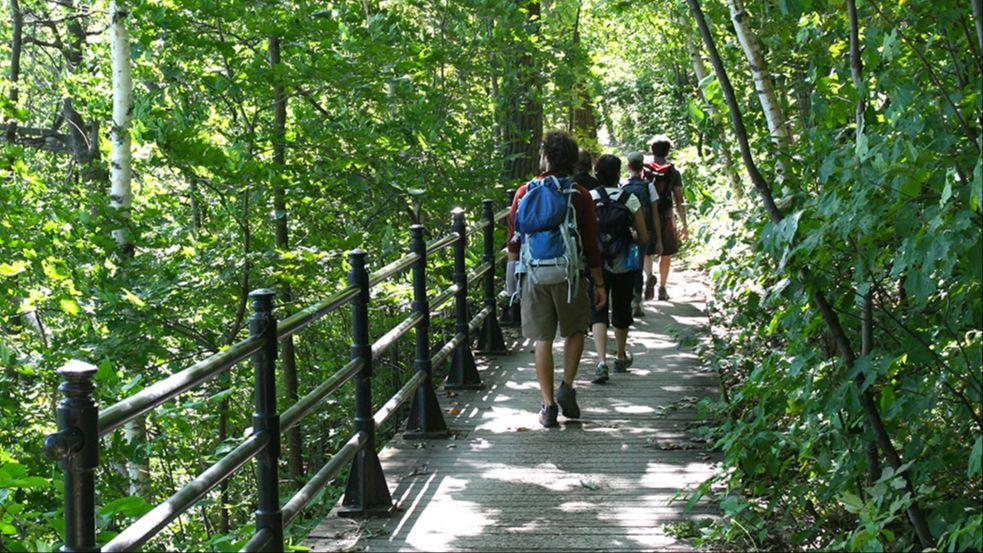 Webinaire : Comment concilier la fréquentation et la conservation du mont Royal?