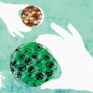 7 mythes sur les virus et les microbes