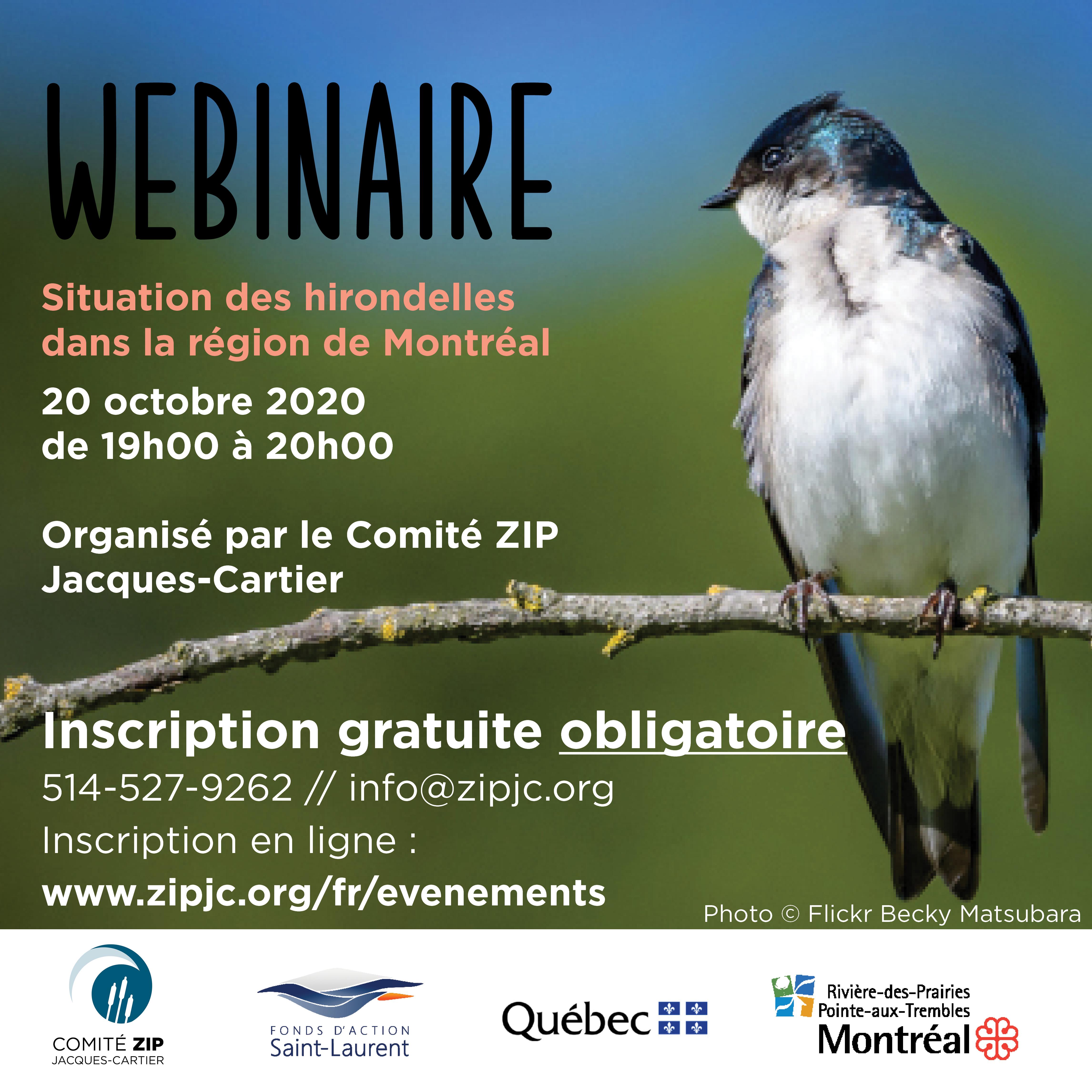 Webinaire : la situation des hirondelles dans la région de Montréal