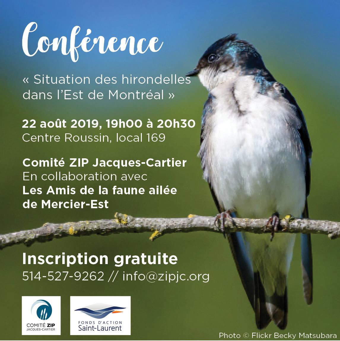 Conférence : la situation des hirondelles dans l'Est de Montréal